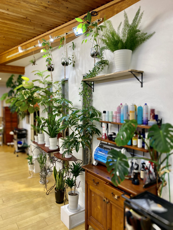 緑いっぱいの癒される空間でお手入れがとても楽なあなただけのスタイルを提案しています